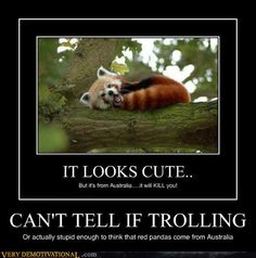 Red pandas rrl?