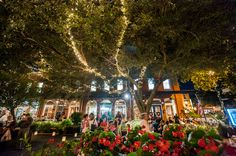 You Haven't Seen a Southern Christmas Until You've Been to Savannah Christmas Events, Christmas Town, Christmas Travel, Christmas Vacation, Xmas, Visit Savannah, Savannah Georgia, Savannah Chat, Christmas Getaways