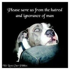 Please save us from the hatred & ignorance of man. Stop Pit Bull Bans