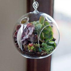 Un terrarium dans une bulle de verre