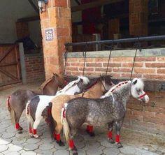 Mini horses in a row Pretty Horses, Horse Love, Beautiful Horses, Animals Beautiful, Cute Baby Animals, Animals And Pets, Miniature Ponies, Tiny Horses, Mini Pony
