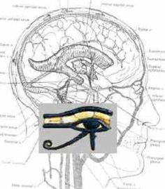 Eye of Horus Brain