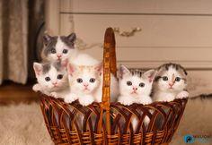 A basket full of kittens...