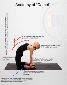 Camel yoga pose helps to relieve lower back pain Iyengar Yoga, Yoga Bewegungen, Yoga Flow, Yoga Meditation, Yoga Series, Pilates, Body Women, Yoga Posen, Yoga Sequences