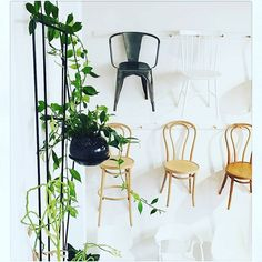Hanging out for the weekend? Our stockist in Adelaide @1k_chairs have moved into new premises..you can see our chairs hanging out there too! Visit by appointment only, 223 Pulteney St - deets on Web site.  #thonetaustralia #chairs #authenticdesign #seating #dining #classic #thonet #chairlove
