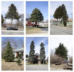 Matthew Jensen - Untitled (from Every Tree in Town), Set of 6, Photograph
