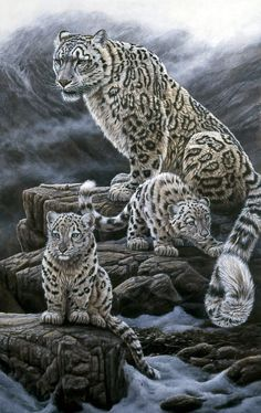 All images are the original artwork of nature artist and wildlife artist Dr. Jeremy Paul and are protected by international copyright laws. Big Cats Art, Cat Art, Wild Life, Animal Paintings, Animal Drawings, Nature Artists, Animal Magic, Snow Leopard, Wildlife Art