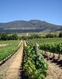 Groot Constantia vineyards, Cape Town. Cape Town, South Africa, Vineyard, City, World, Wines, Outdoor, Image, Outdoors