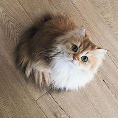 Smoothie the Cat Is Instagram's New Beauty Queen