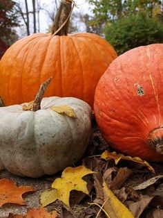 Pumpkins Passion
