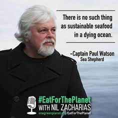 Can Seafood be Sustainable? Captain Paul Watson of Sea Shepherd Has the Answer… and a Warning   One Green Planet