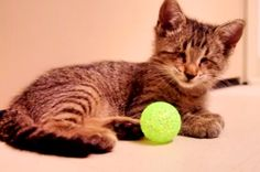 A Blind Kitten Just Received His First Toy. This Will Make Your Whole Week!