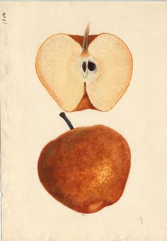 sand.pear.jpg (627×907) Artist: James Marion Shull. From Mrs. K.E. Gnard, Fairfax, Virginia, 12/9/1941