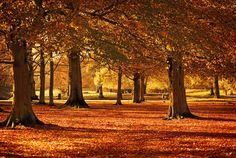 beautiful! www.fiskars.com