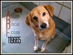 San Antonio ACS Shelter: Hello! My name is Jack ID #A119665 To adopt: 210-207-6666 acsadoption@sanantonio.gov PetHarbor.com: Animal Shelter adopt a pet; dogs, cats, puppies, kittens! Humane Society, SPCA. Lost & Found.