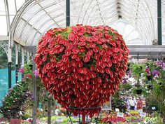 clever and beautiful floral display of Anthurium andraeanum flowers Flowers Nature, Tropical Flowers, Colorful Flowers, Blooming Flowers, Tropical Plants, Deco Floral, Arte Floral, Garden Pictures, Flower Pictures