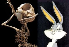 """A new series of works by artist Hyungkoo Lee called """"Animatus"""" features hand-fabricated skeletons of cartoon characters along with detailed anatomical drawings. According to the artist, the Animatus series started with the """"intention to analyze anatomical structures and physical forms of animation characters, within the hypothesis to visualize their possible anatomical foundation."""" Lee constructs the skeletons using a hybrid mix of real animal bones and synthetic materials."""