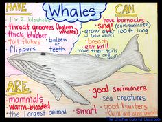 The Creative Colorful Classroom: Informational Anchor Charts Ocean Projects, Animal Projects, Ocean Activities, Preschool Activities, Vocabulary Activities, Preschool Lessons, Preschool Worksheets, Glad Strategies, Ocean Habitat