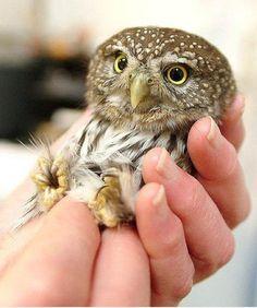 I just love owls. precious..