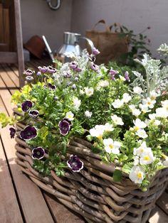 寄せ植え Rustic Gardens, Outdoor Gardens, Cottage Garden Plan, Bountiful Baskets, Plant Basket, Pot Plante, English Country Gardens, Green Flowers, Garden Planning