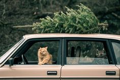 buying the tree and putting the ornaments ON are not really where the magic happens, so we'd like to get this show on the road