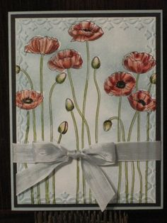 pleasant poppies with tulip border