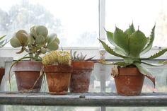 cacti in terracotta