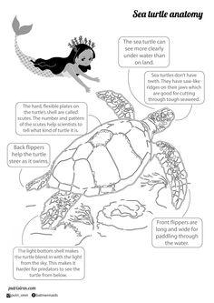 Putri Siren and Puri Turtle