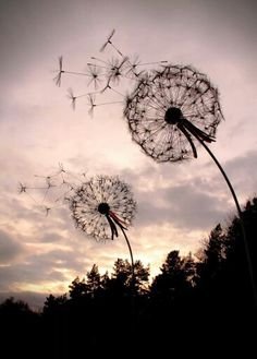 Wire dandelions for the garden