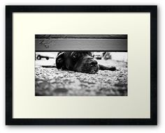 #photography #photo #art #print #artprint #streetphotography #streetphoto #bw #blackandwhite #eyes #street #frame #framedprint #findyourthing #photographs #artforsale #wallart #prague #czechia #czechrepublic #city #urban #dogs #dog #pet #guard #animals #doggie