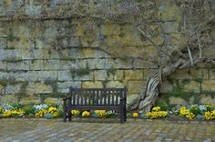A seat in Springtime. Outdoor Furniture, Outdoor Decor, Spring Time, Outdoors, Peace, Nature, Home Decor, Naturaleza, Decoration Home