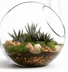 Modern Gardening Modern Garden Idea - This modern spin on the terrarium brings sophistication and nature to any room. Our kit makes creating this natural scene easy and comes with everything needed. Detailed instructions are included. Cactus Terrarium, Glass Terrarium Ideas, Water Terrarium, Suculentas Interior, Indoor Plants Online, Succulent Bowls, Pot Jardin, Decoration Plante, Planting Succulents