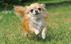 dog pics with names | Image Credit: iStockphoto/Thinkstock (4) | Steve Prezant/Corbis ...