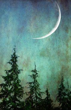 Svetlana Sewell - Trees