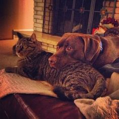 And watching TV together. | 19 Super Cute Photos Of Cats And Dogs Being BFFs