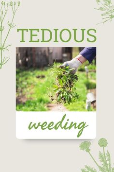 Even though weeding is a tedious chore, it is often necessary. So all you can do it look at the positives and who knows, you may just gain something from the experience! To read more click below. Weed Control, All You Can, Weeding, Gain, Herbs, Backyard, Positivity, Canning, Grass