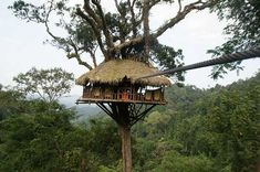 """Tree house from """"The Gibbon Experience"""" in the Bokeo Nature Reserve in Laos"""
