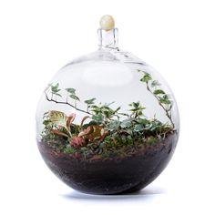 Terrarium, Ale, Plants, Home Decor, Terrariums, Decoration Home, Room Decor, Ale Beer, Plant