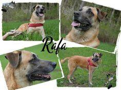 Hundepfoten in Not - Mischling Rafa, 05/2010