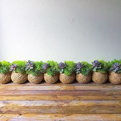 How do I care for my succulent kokedama? – Tips & Advice