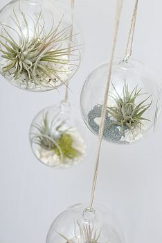 Hanging garden orbs for air plants - perfect for plant killers