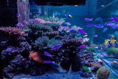 Saltwater Aquarium Fish, Saltwater Tank, Reef Aquarium, Reptile Cage, Reptile Enclosure, Sps Coral, Ocean Creatures, Exotic Fish, Horse Care