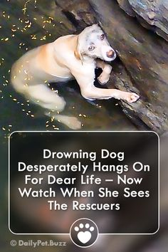 Drowning Dog Desperately Hangs On For Dear Life – Now Watch When She Sees The Rescuers via Big Cat Rescue, Rescue Dogs, Pet Dogs, Pets, Animal Rescue Stories, Dog Stories, Funny Baby Faces, Funny Babies, Bull Mastiff Puppies