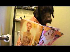 Um cão um uma vida normal   Veja mais em: http://www.jacaesta.com/um-cao-um-uma-vida-normal/