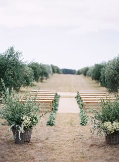 How can we not mention greenery when talking about 2017 wedding trends? Even the color authority Pantone has put 2 greenery colors onto its 2017 spring top 10 fashion colors board. For Greenery elements, olive branche. Wedding Ceremony Ideas, Wedding Aisles, Tree Wedding, Outdoor Ceremony, Church Wedding, Wedding Venues, Wedding Blog, Wedding Aisle Outdoor, Field Wedding