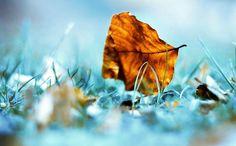 hq-wallpapers_ru_nature_48304_1280x1024