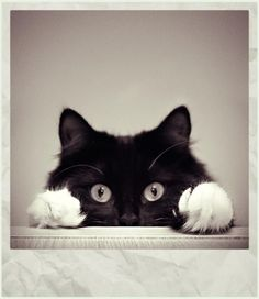 This cat looks just like Belew did when she was a kitten.