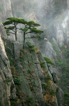Lone trees in the mountains. Japan.