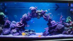 Ons eigen aquarium