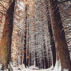 Narnia? Nornia #Norway #Trees